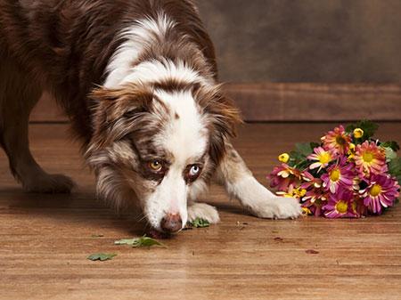 Dog on Hardwood floor   Flooring Concepts