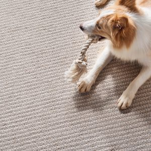 Pet friendly Carpet | Flooring Concepts