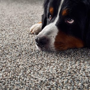 Pet friendly floor | Flooring Concepts