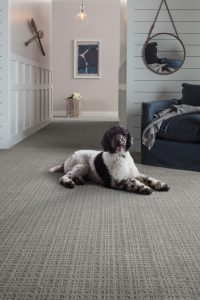 Dog on Carpet | Flooring Concepts